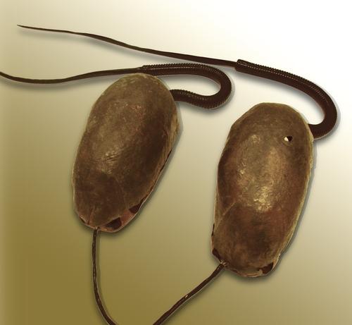 Protozoa CYLAND MediaArtLab