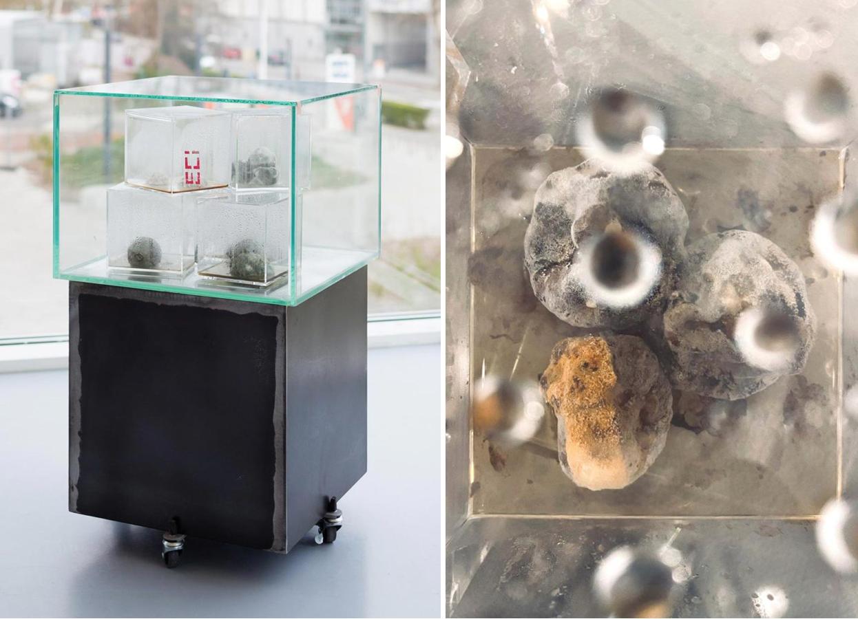 'Disappearance' – slow process experiment, sculpture. Bacteria, plexi glass, glass, metal. 40cm x 40cm x 65cm.